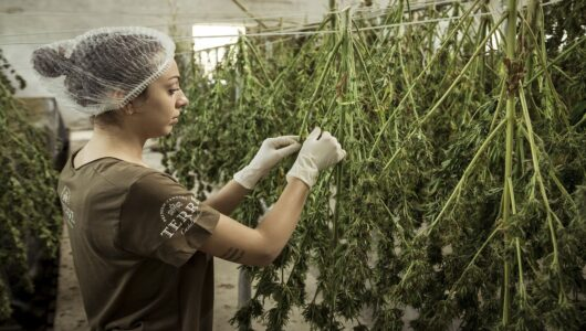 Are You in Compliance with Nevada's Cannabis Testing Facility Regulations?